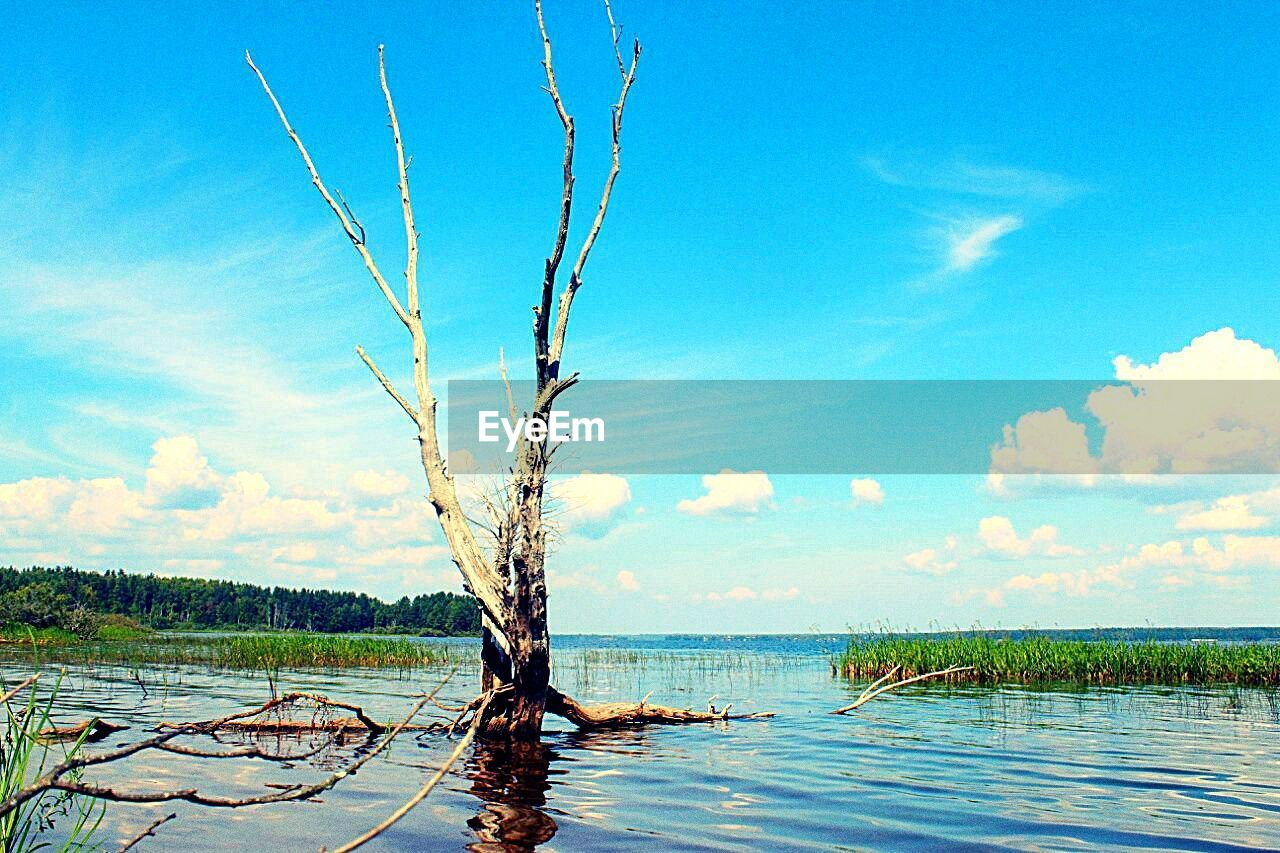 sky, tree, tranquility, nature, no people, day, scenics, water, outdoors, beauty in nature, sea, landscape