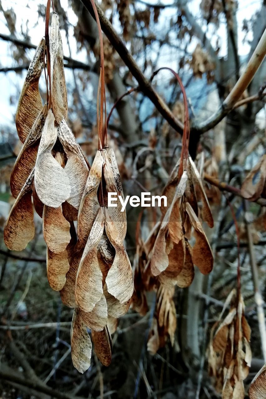 plant, close-up, focus on foreground, leaf, day, plant part, nature, dry, no people, tree, growth, beauty in nature, vulnerability, branch, fragility, outdoors, twig, cold temperature, tranquility, winter, leaves, change, natural condition