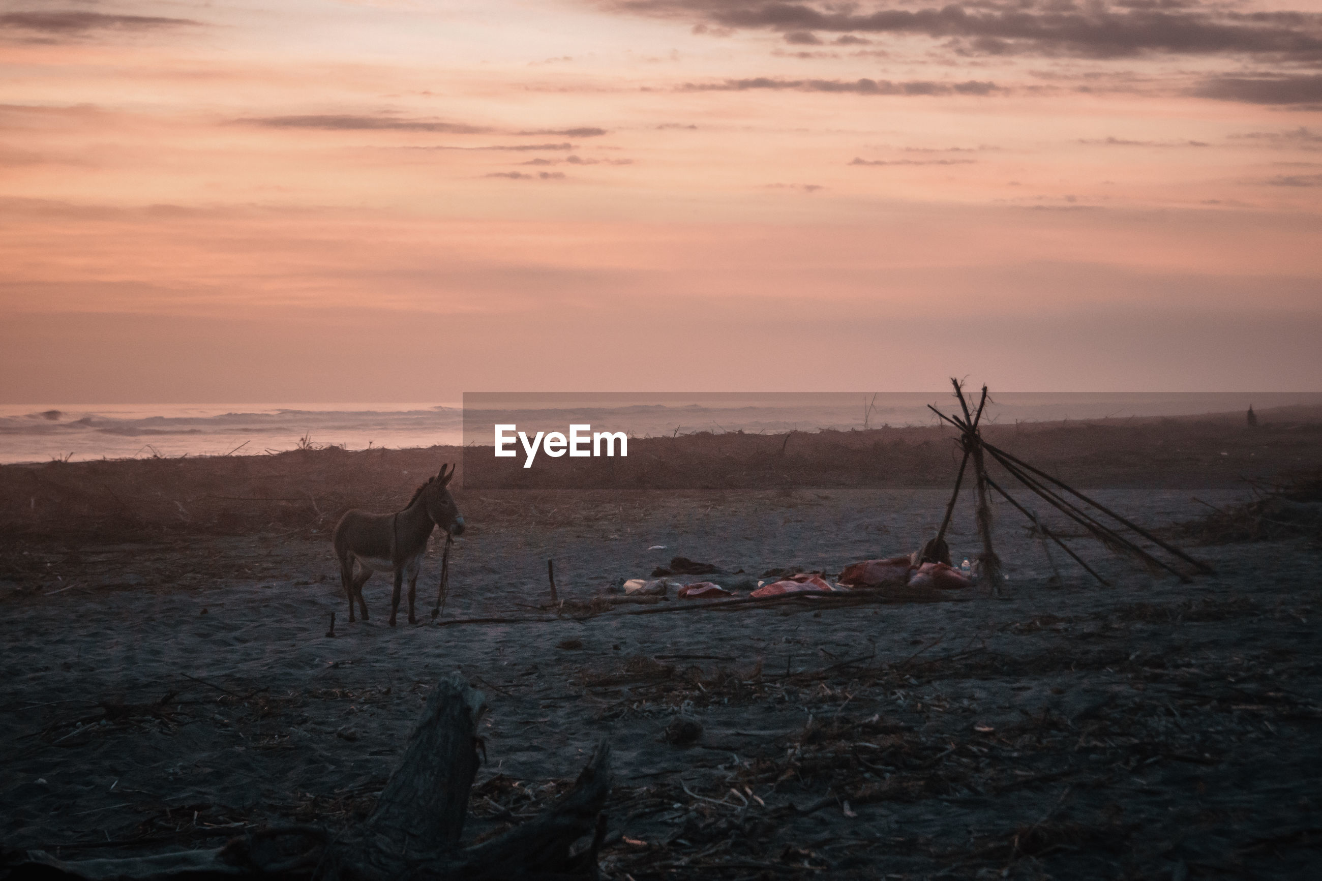 Donkey standing on land during sunset