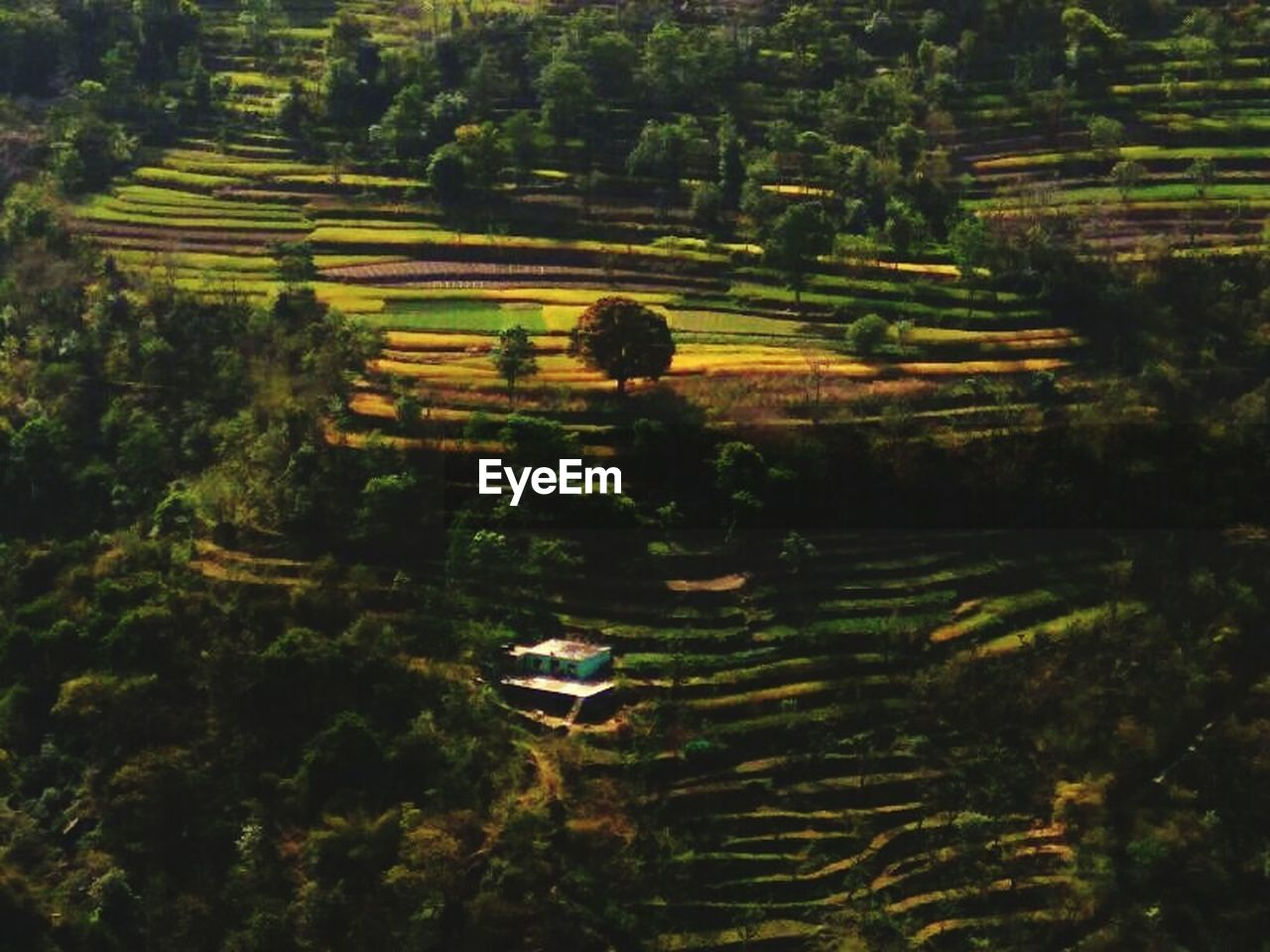 agriculture, tree, tranquil scene, tranquility, growth, nature, landscape, scenics, outdoors, high angle view, beauty in nature, rice paddy, day, field, no people, terraced field, maze, rural scene, water