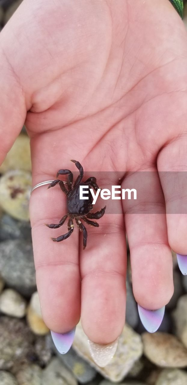 human hand, animal wildlife, animals in the wild, hand, one animal, human body part, real people, one person, holding, finger, body part, human finger, day, unrecognizable person, close-up, insect, invertebrate, outdoors, small, marine