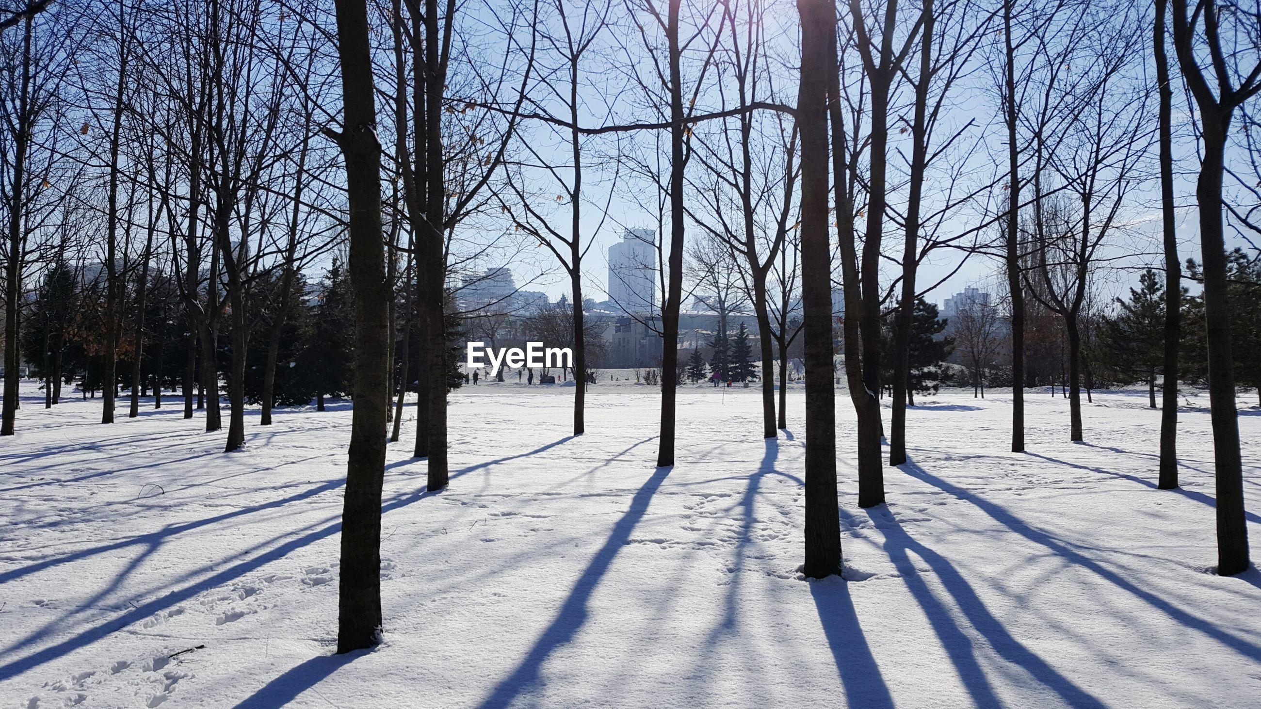 TREES ON SNOWY LANDSCAPE