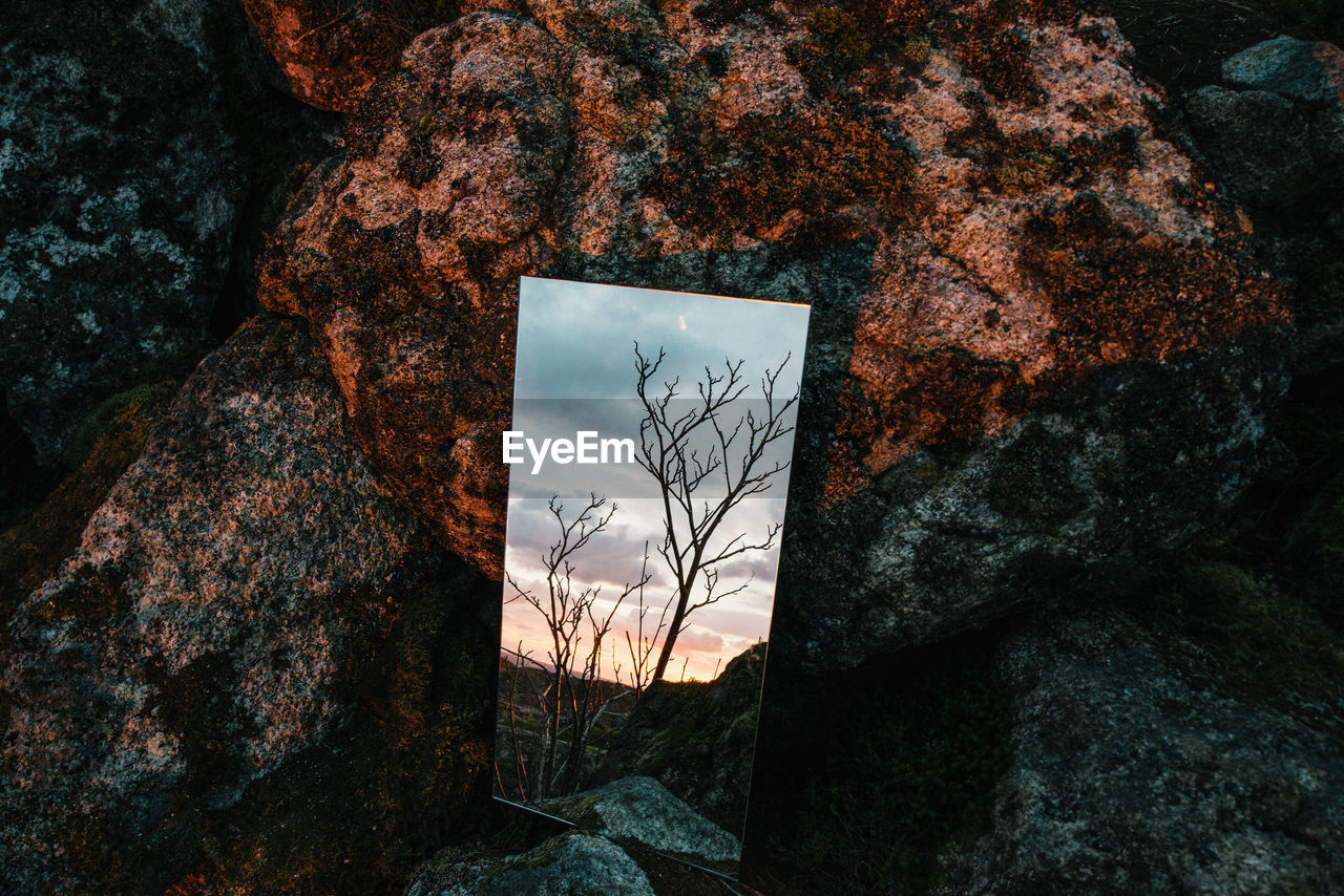 Reflection Of Bare Tree In Mirror By Rock