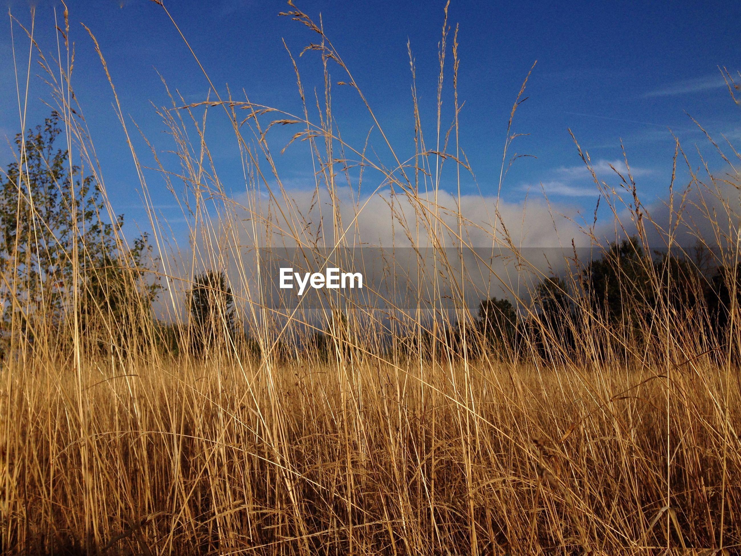 Field against cloudy sky