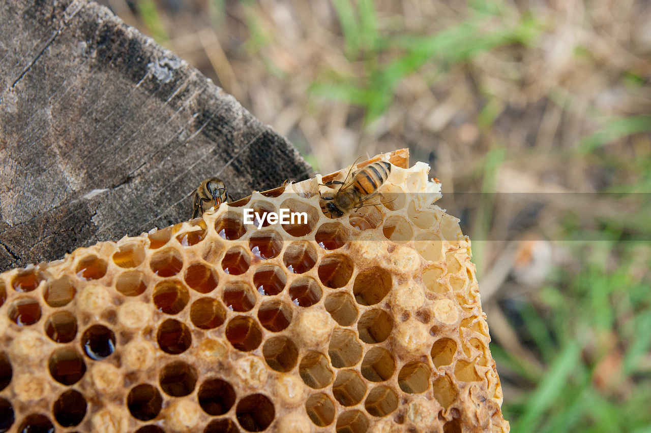 animals in the wild, animal wildlife, honeycomb, animal themes, bee, beehive, animal, apiculture, close-up, invertebrate, honey bee, insect, group of animals, focus on foreground, nature, beauty in nature, day, no people, honey