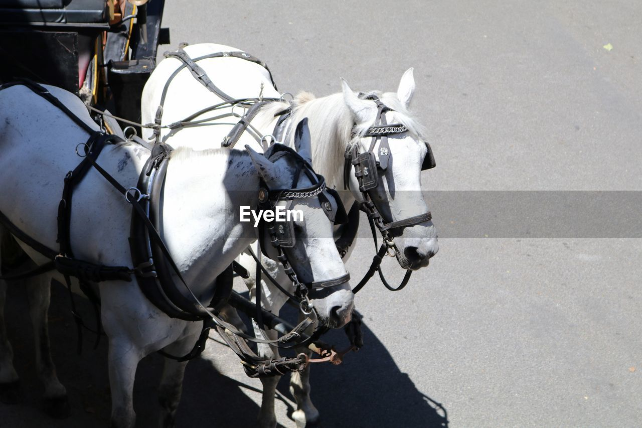 High angle view of horses on street