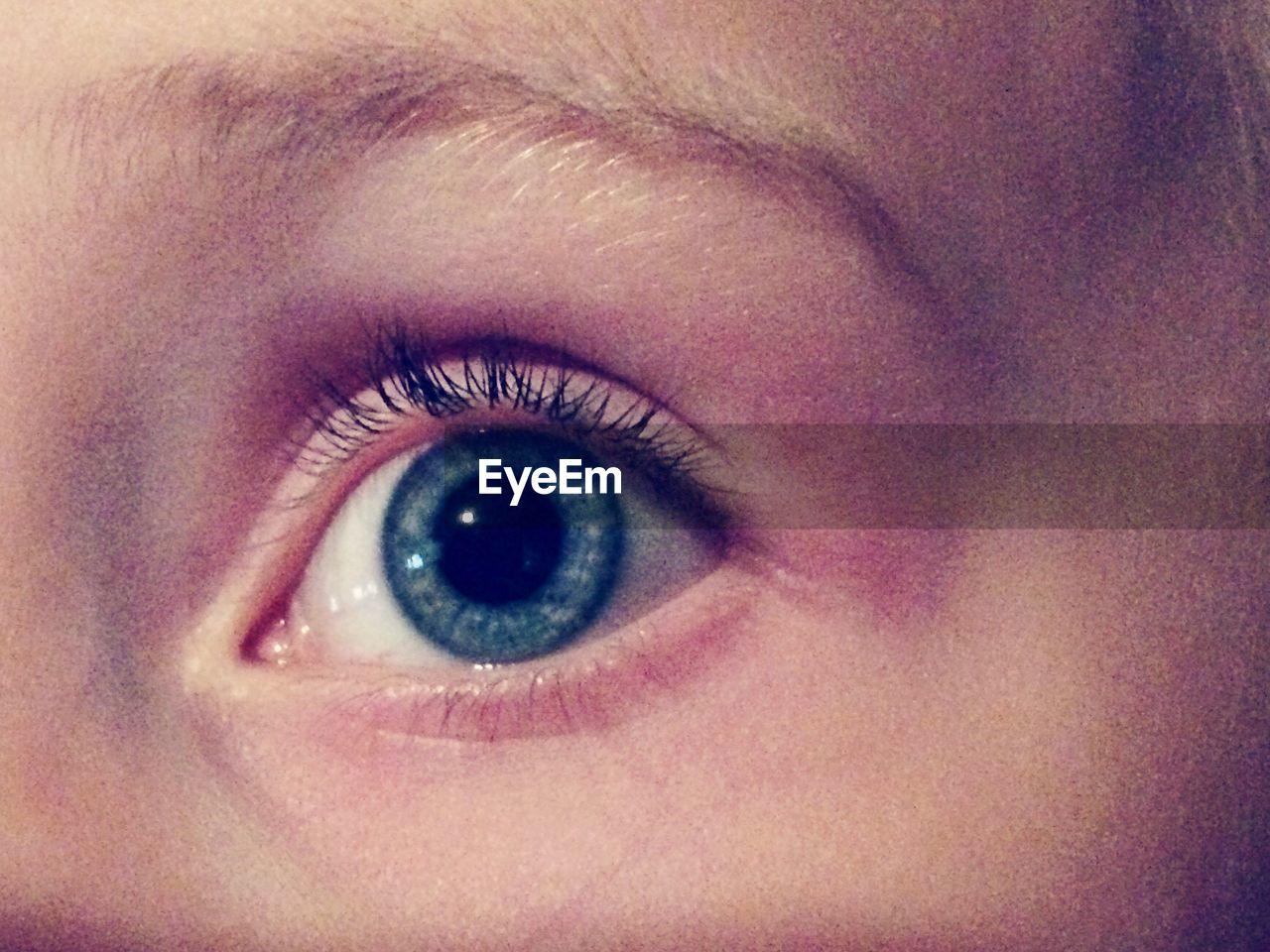 human eye, human body part, eyelash, one person, eyesight, eyeball, sensory perception, close-up, looking at camera, eyebrow, iris - eye, real people, portrait, indoors, day, people, adult