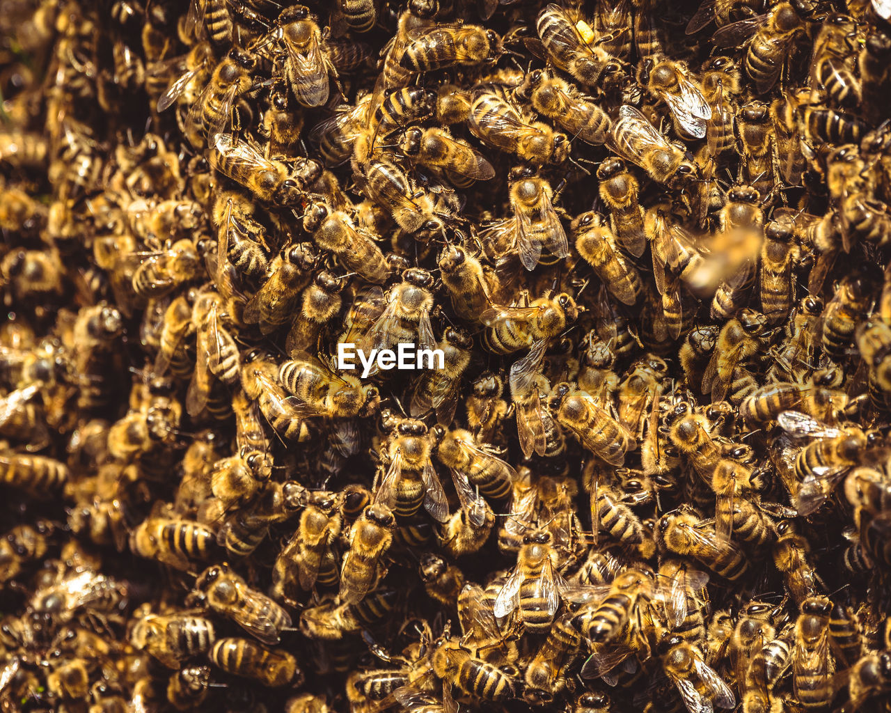 FULL FRAME SHOT OF BEE ON THE GROUND
