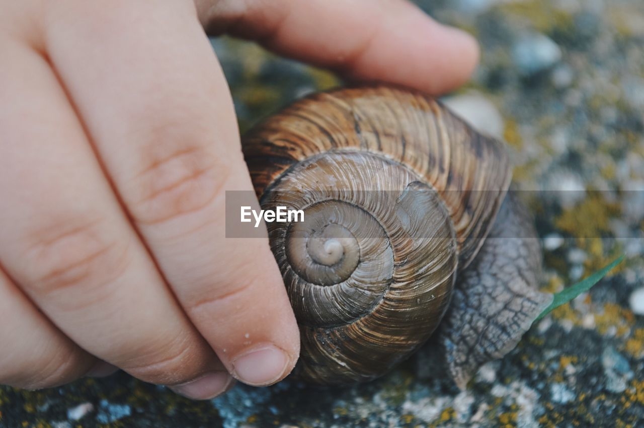 Close-Up Of Human Hand Holding Snail