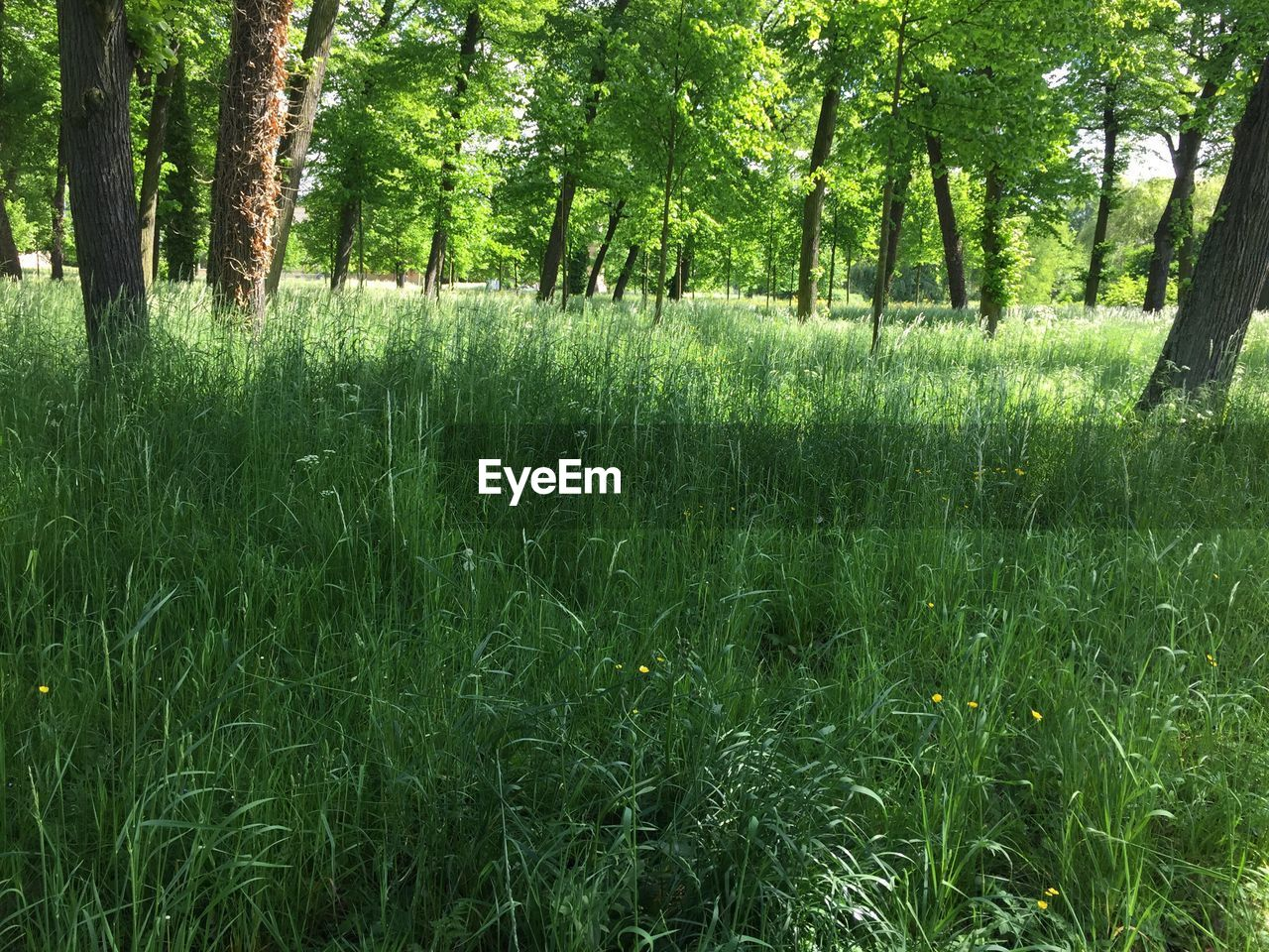 Trees growing on grassy meadow
