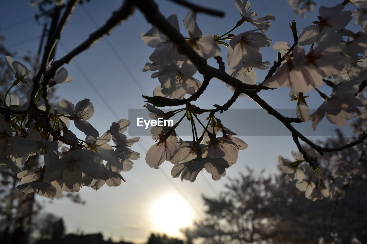 LOW ANGLE VIEW OF FLOWERS BLOOMING ON BRANCH