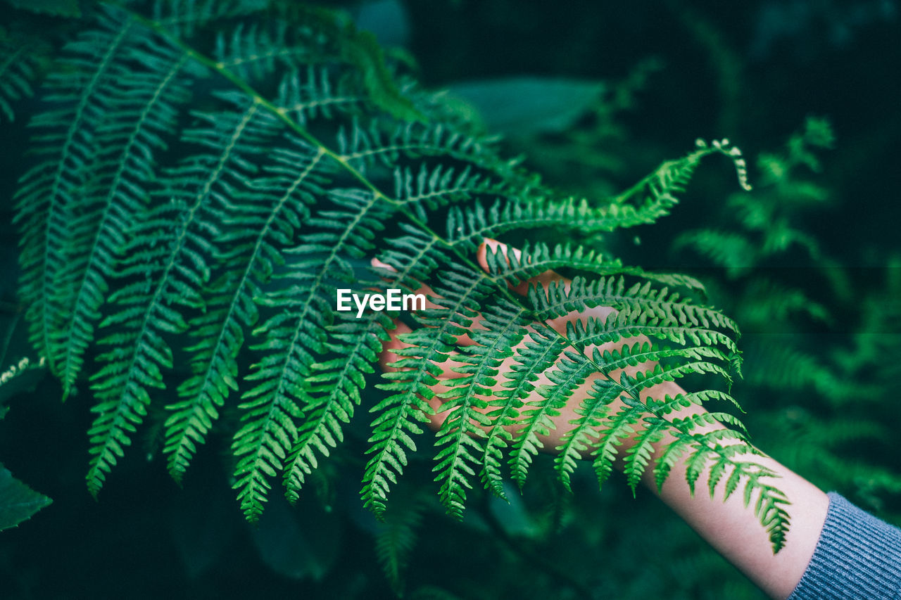 Cropped Image Of Woman Touching Fern Leaves