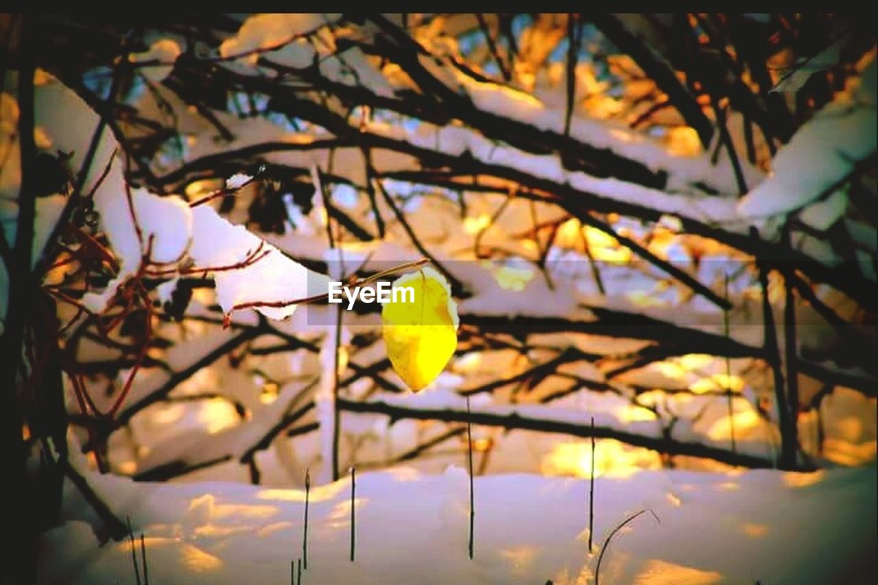 flower, branch, beauty in nature, tree, nature, yellow, fragility, growth, petal, no people, leaf, close-up, outdoors, freshness, day, flower head, sky
