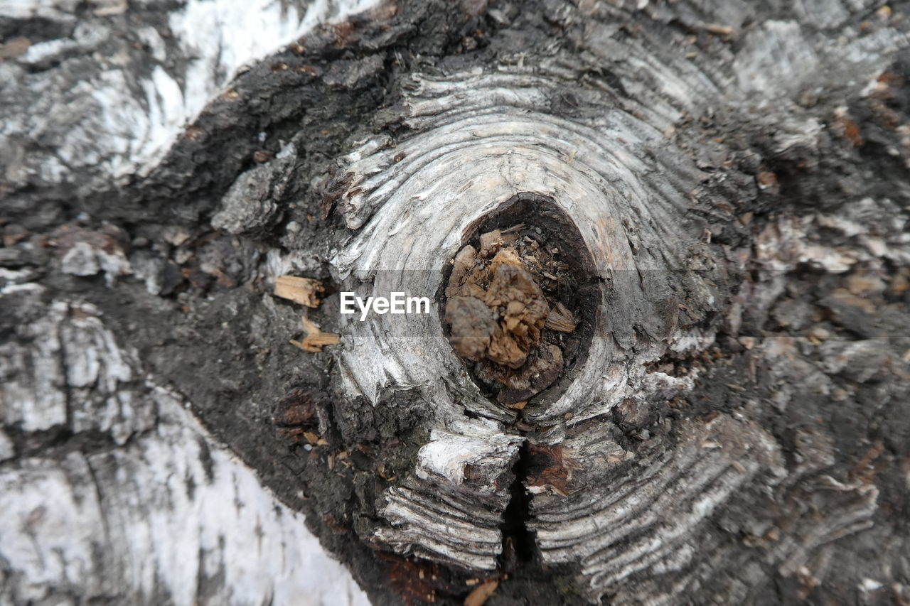 textured, tree, close-up, wood - material, day, tree trunk, trunk, nature, no people, rough, full frame, plant, bark, selective focus, natural pattern, pattern, outdoors, backgrounds, plant bark, wood, textured effect