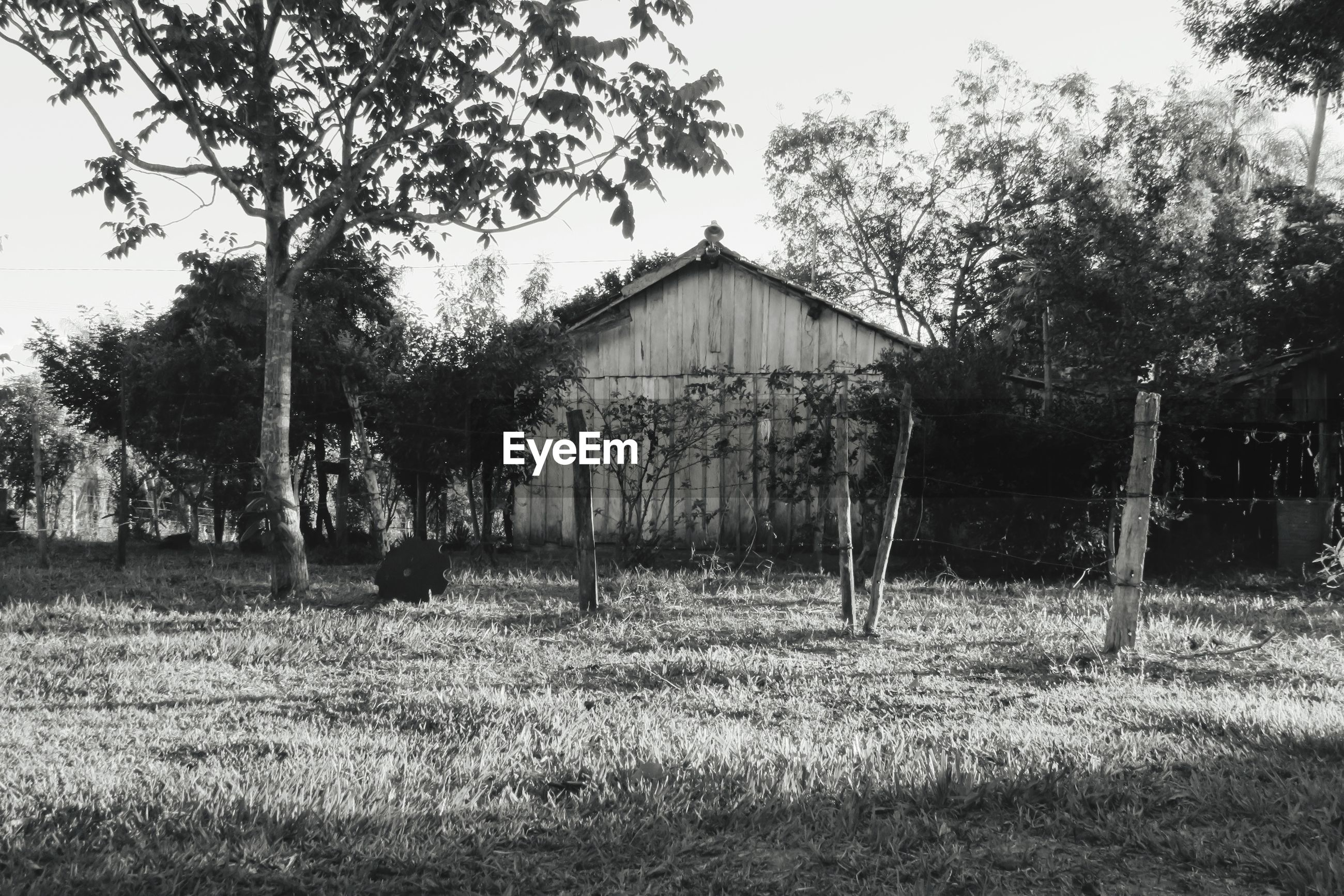 VIEW OF BARN ON FIELD
