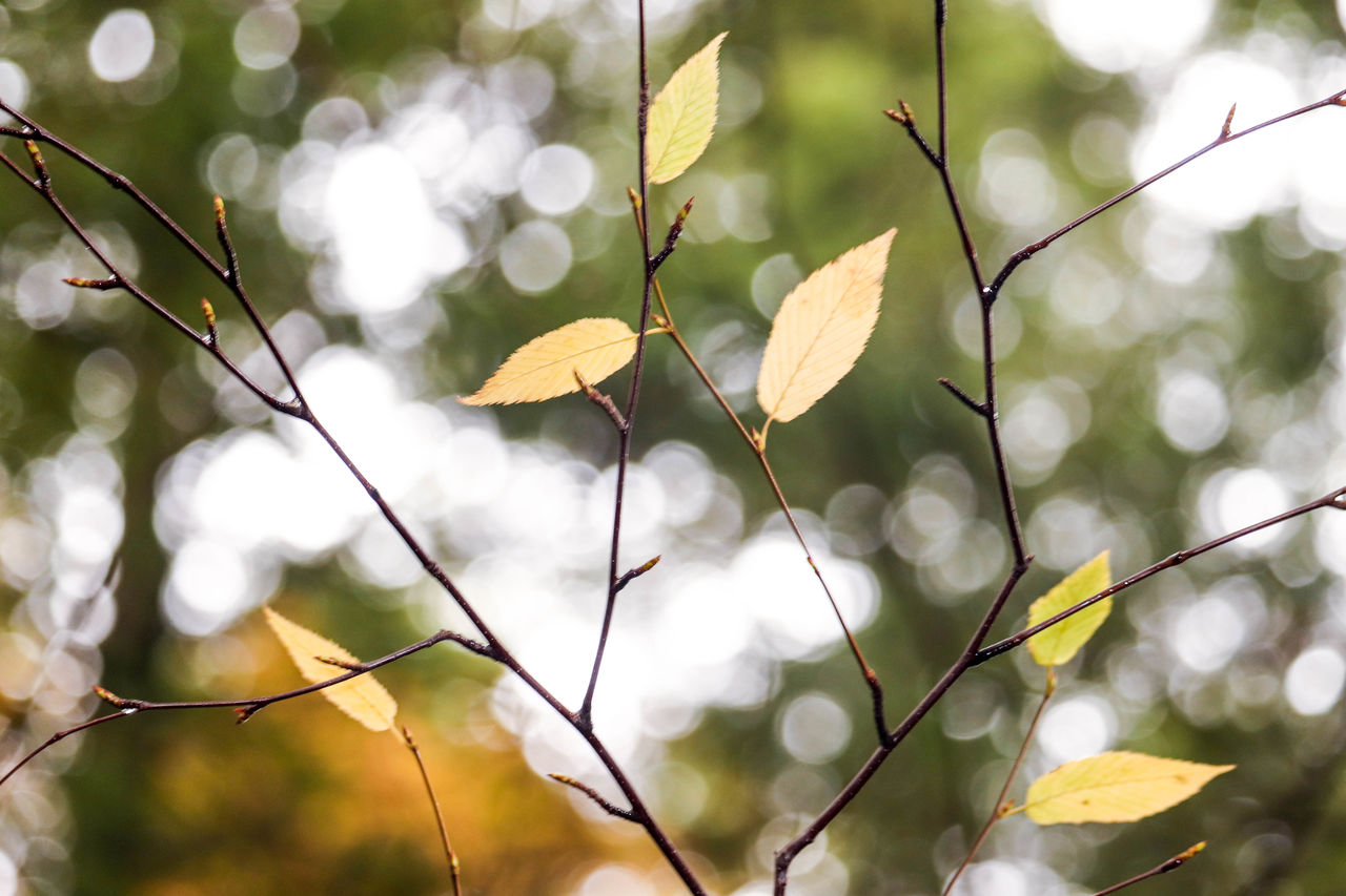plant, focus on foreground, growth, close-up, beauty in nature, leaf, plant part, day, no people, nature, tree, vulnerability, outdoors, fragility, yellow, branch, low angle view, twig, freshness, sunlight, change, leaves, natural condition