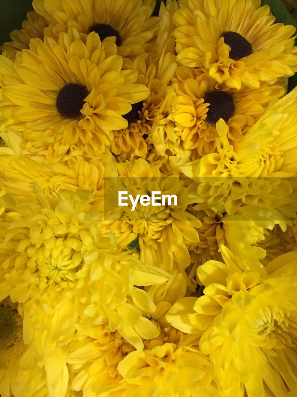 flower, yellow, freshness, fragility, petal, flower head, no people, backgrounds, close-up, beauty in nature, full frame, flower market, nature, outdoors, day