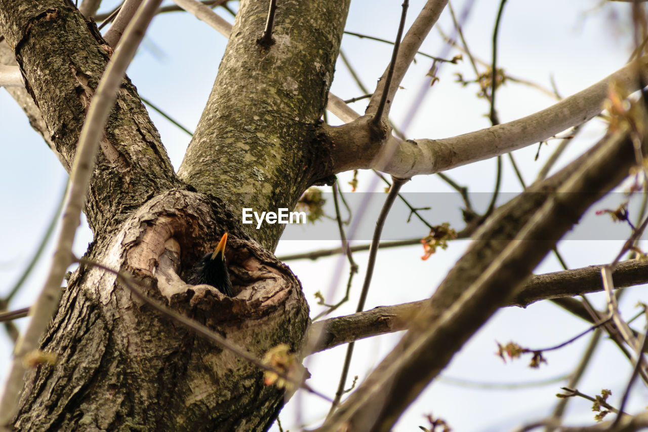 tree, branch, plant, low angle view, animals in the wild, animal wildlife, animal, no people, nature, animal themes, day, tree trunk, trunk, focus on foreground, bird, sky, perching, vertebrate, outdoors, selective focus