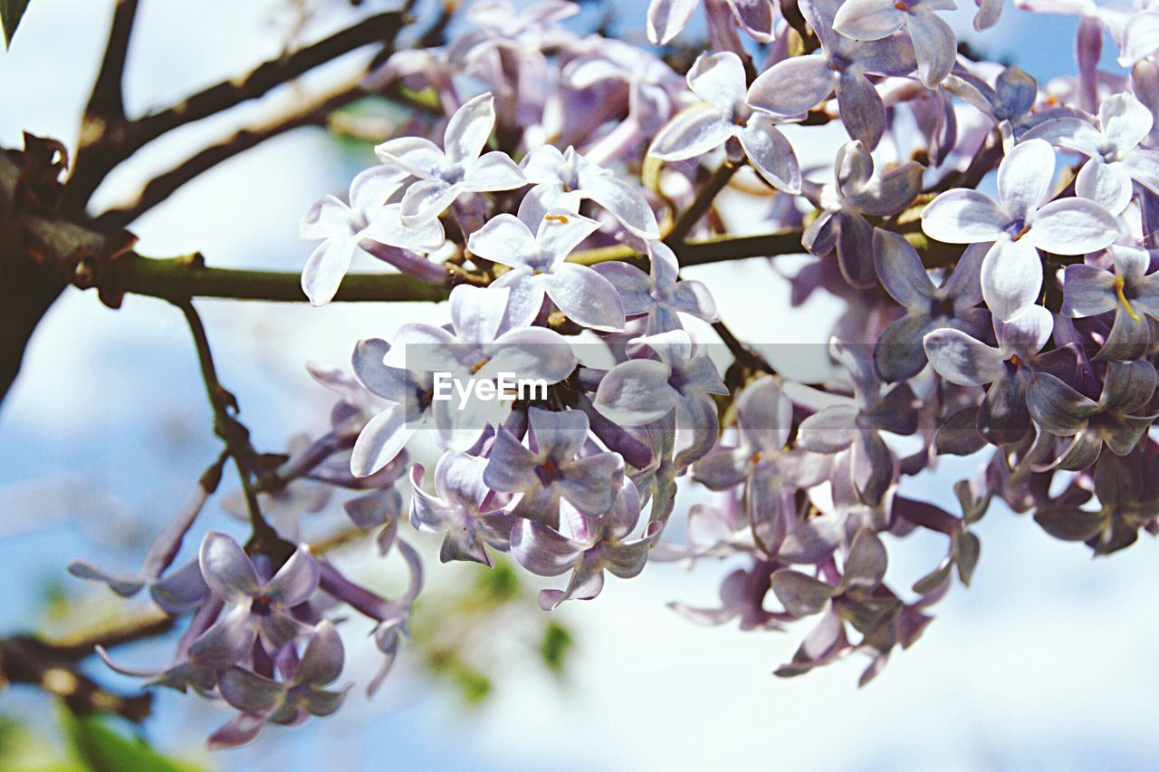 flower, fragility, blossom, beauty in nature, springtime, tree, branch, freshness, cherry blossom, growth, petal, botany, nature, apple blossom, white color, twig, apple tree, cherry tree, almond tree, orchard, close-up, no people, flower head, magnolia, day, selective focus, pollen, stamen, outdoors, plum blossom, low angle view, focus on foreground, blooming, sky