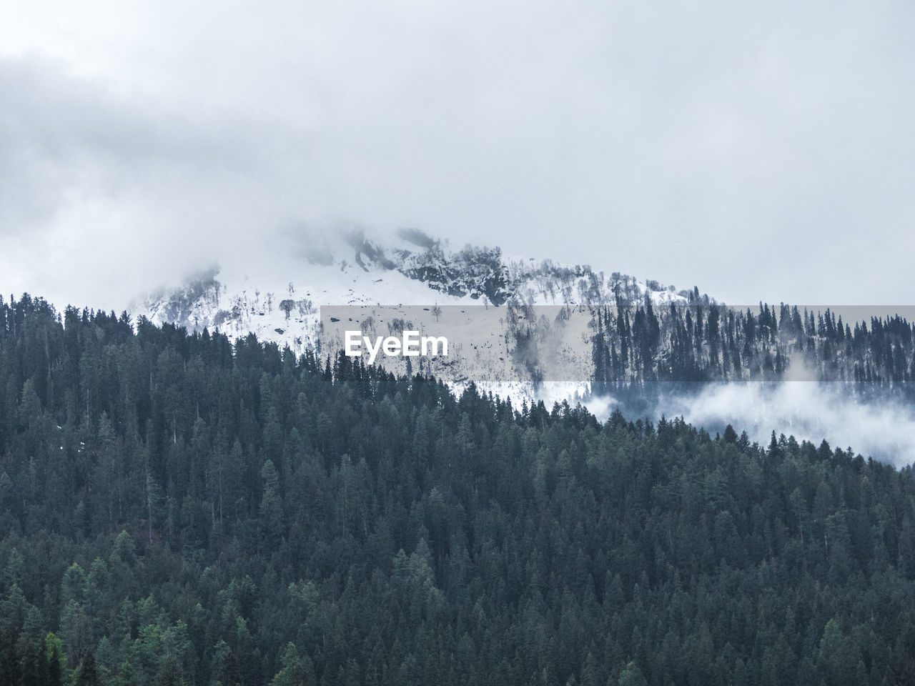tree, plant, beauty in nature, scenics - nature, mountain, tranquil scene, tranquility, nature, non-urban scene, sky, no people, day, growth, environment, cold temperature, land, winter, forest, fog, outdoors, woodland, pine tree, snowcapped mountain, coniferous tree, high