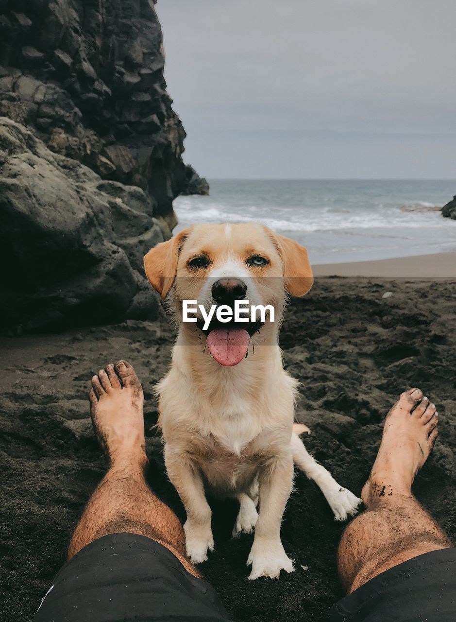 Dog with low section of man on beach