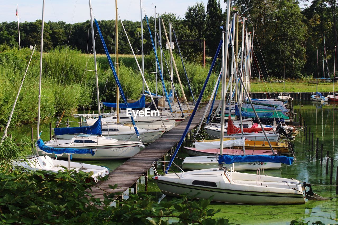 nautical vessel, moored, water, transportation, mode of transportation, plant, tree, nature, sailboat, day, no people, lake, pole, mast, growth, beauty in nature, tranquility, grass, harbor, outdoors, yacht