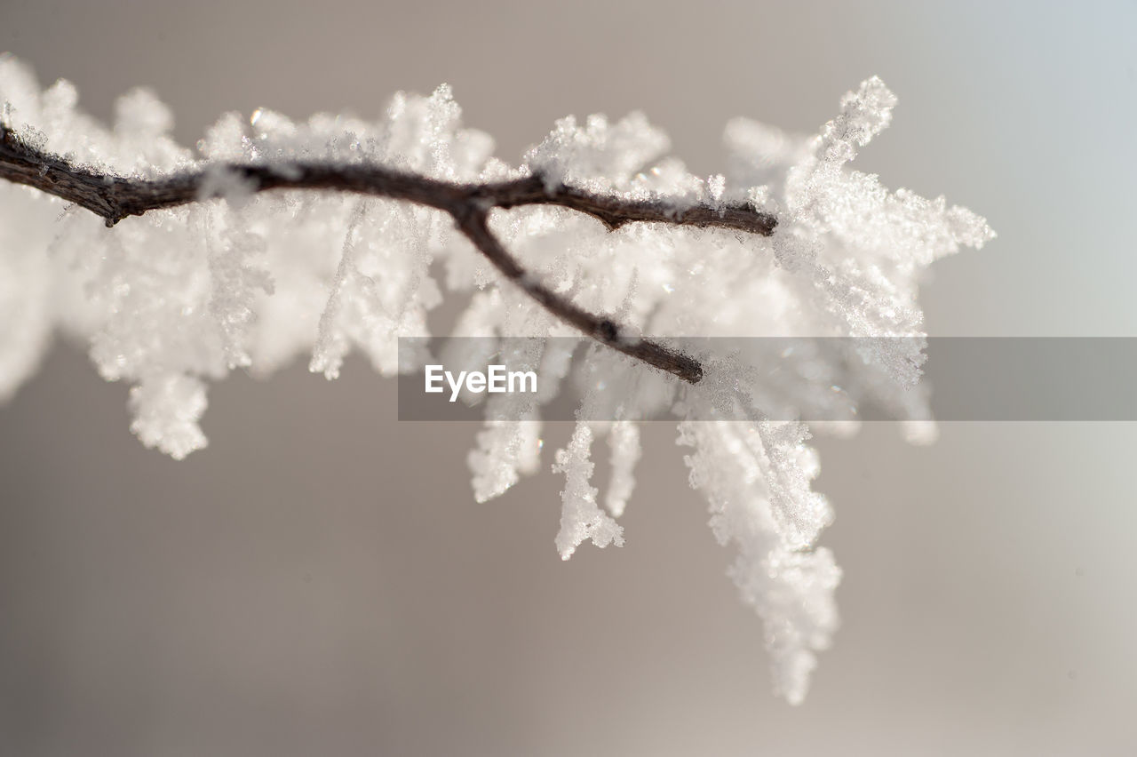 cold temperature, winter, snow, frozen, white color, nature, weather, ice, beauty in nature, no people, focus on foreground, frost, day, outdoors, close-up, fragility, sky