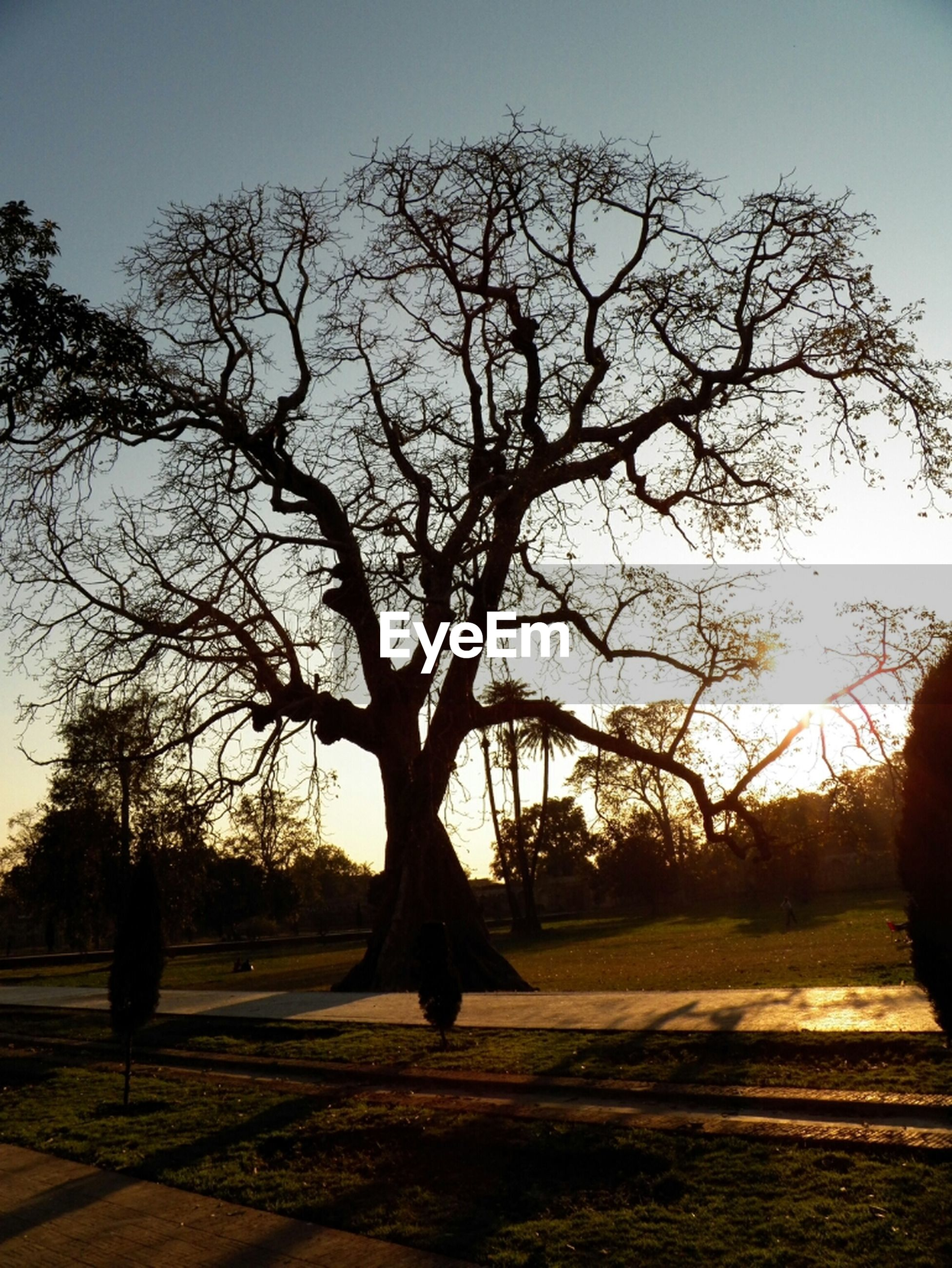 tree, silhouette, sun, sunset, sunlight, bare tree, sky, tranquility, sunbeam, tranquil scene, lens flare, branch, nature, shadow, scenics, beauty in nature, road, back lit, landscape, tree trunk