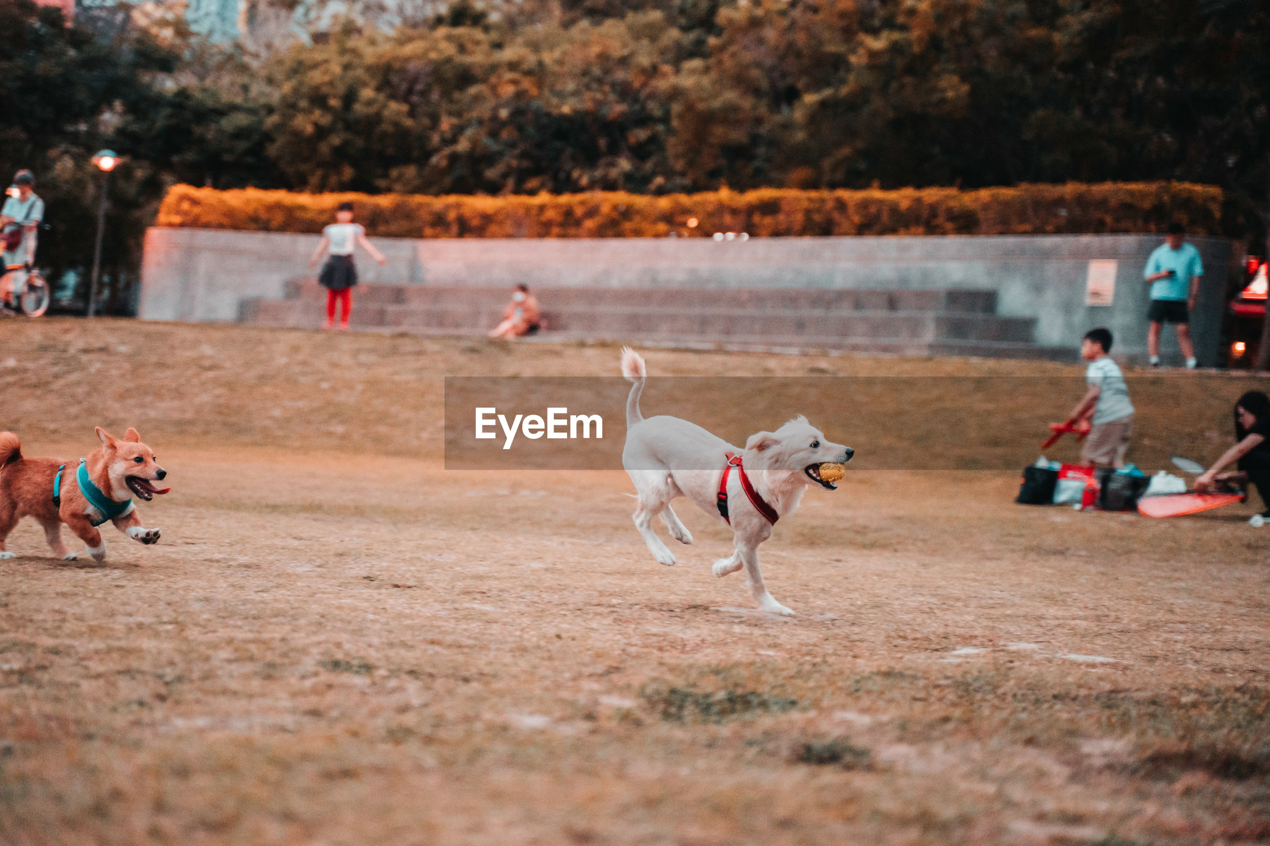 PEOPLE PLAYING WITH DOG RUNNING