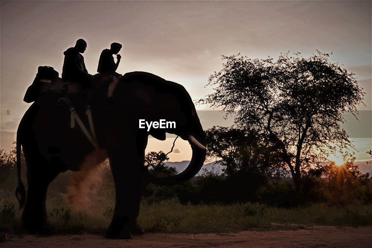 tree, silhouette, men, sunset, real people, mammal, elephant, outdoors, full length, riding, sky, adventure, one animal, domestic animals, day, nature, one person, people