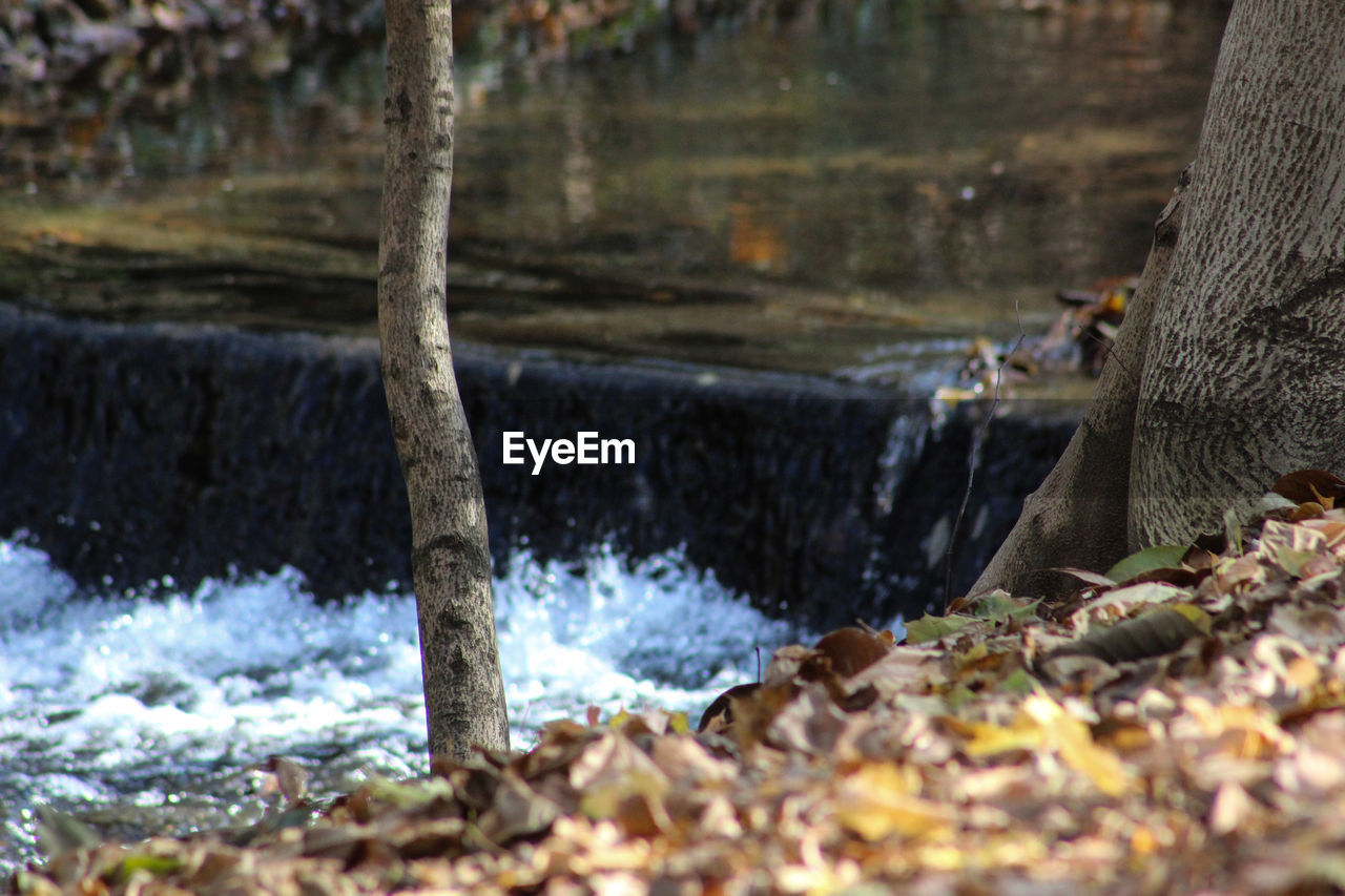 motion, nature, water, tree, no people, rock - object, day, beauty in nature, outdoors, tree trunk, close-up