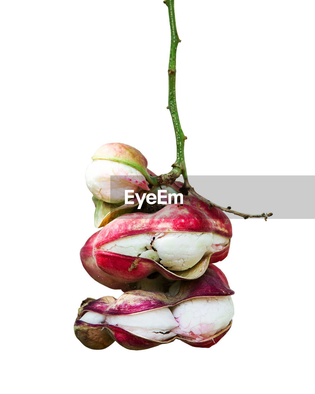studio shot, healthy eating, close-up, food and drink, wellbeing, freshness, food, no people, still life, white background, indoors, vegetable, raw food, red, cut out, fruit, copy space, onion, plant, plant stem