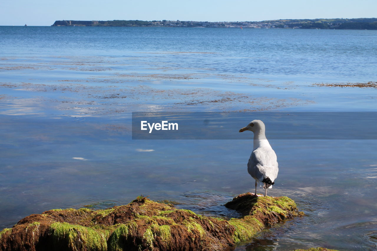 Seagull Perching On Rock On Shore