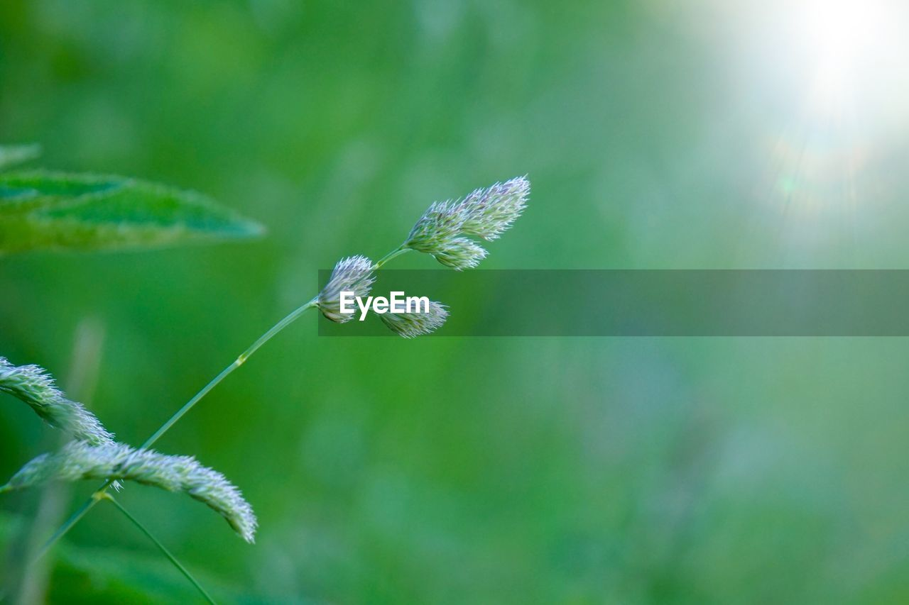 beauty in nature, plant, growth, fragility, close-up, nature, day, vulnerability, flower, flowering plant, no people, focus on foreground, green color, insect, sunlight, animal wildlife, one animal, animal themes, freshness, invertebrate, outdoors, flower head, animal wing, pollination, butterfly - insect