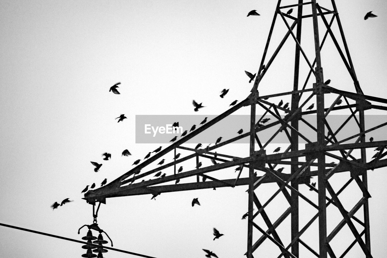 vertebrate, bird, animal, animal themes, sky, group of animals, animal wildlife, animals in the wild, low angle view, flying, large group of animals, silhouette, nature, no people, clear sky, flock of birds, day, cable, outdoors, electricity, power supply