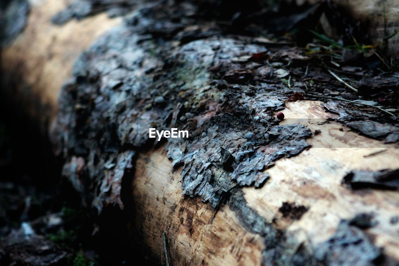 selective focus, tree, close-up, textured, wood - material, tree trunk, forest, trunk, day, no people, nature, plant, land, outdoors, bark, rough, wood, log, growth, plant bark, toadstool