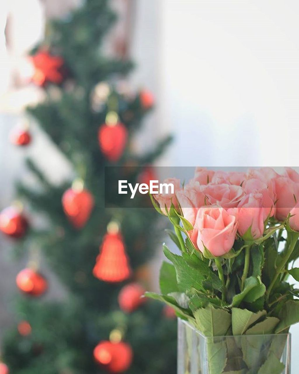 flower, rose - flower, pink color, no people, close-up, focus on foreground, day, freshness, vase, nature, fragility, bouquet, celebration, beauty in nature, flower head, indoors, peony
