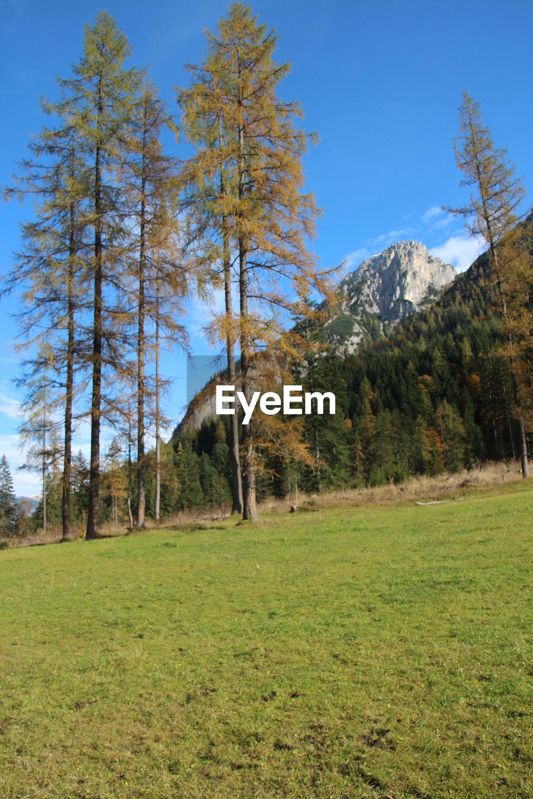 TREES ON GRASSY LANDSCAPE AGAINST MOUNTAIN RANGE