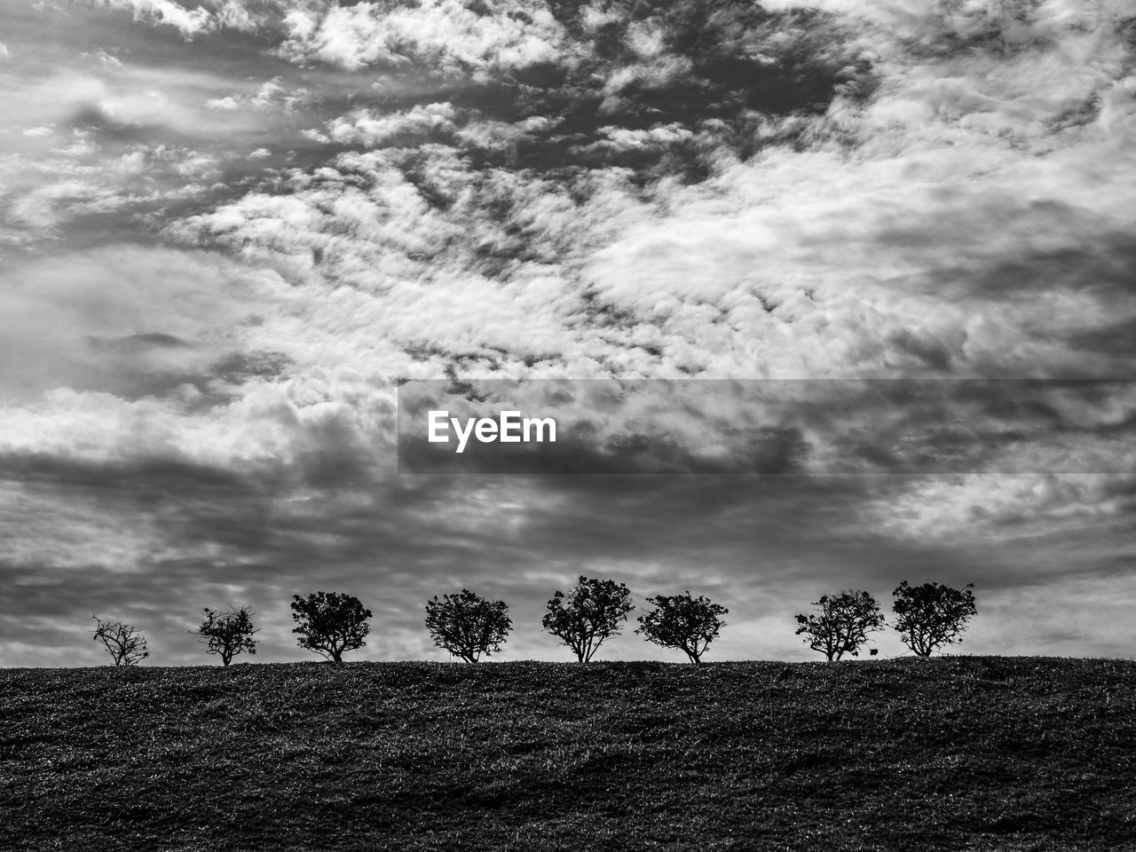 cloud - sky, sky, plant, tree, beauty in nature, land, landscape, tranquility, environment, tranquil scene, nature, field, scenics - nature, day, growth, outdoors, non-urban scene, no people, grass