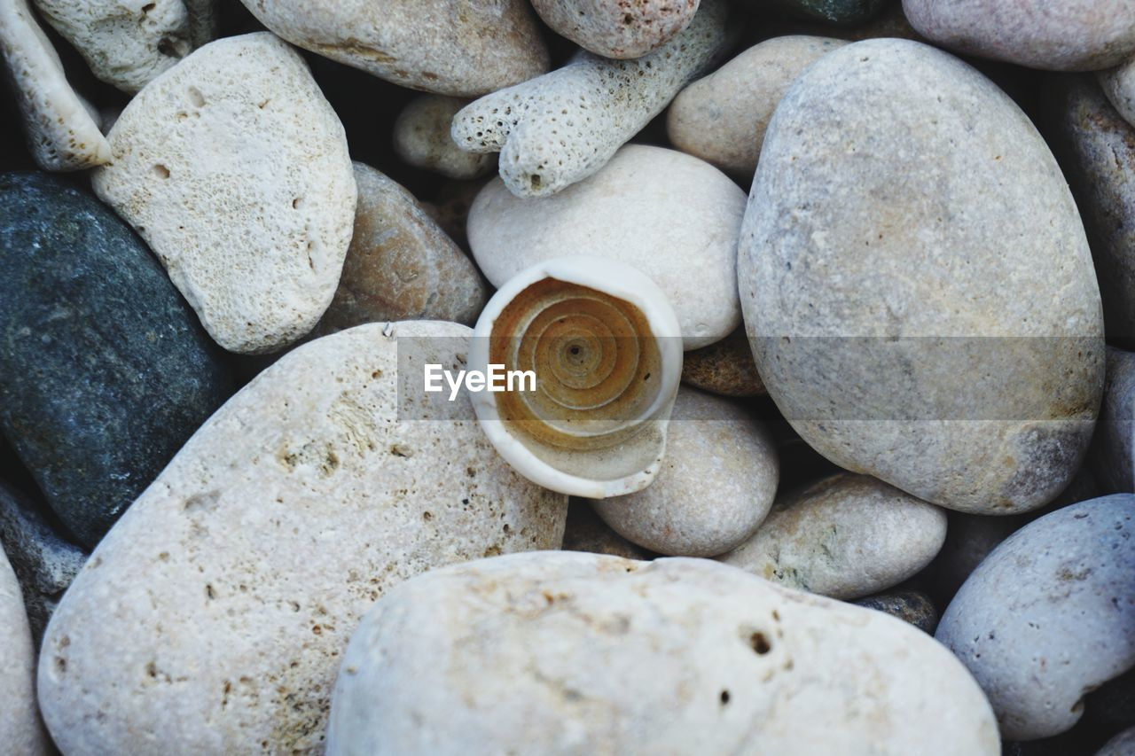 Directly above shot of seashell on pebbles