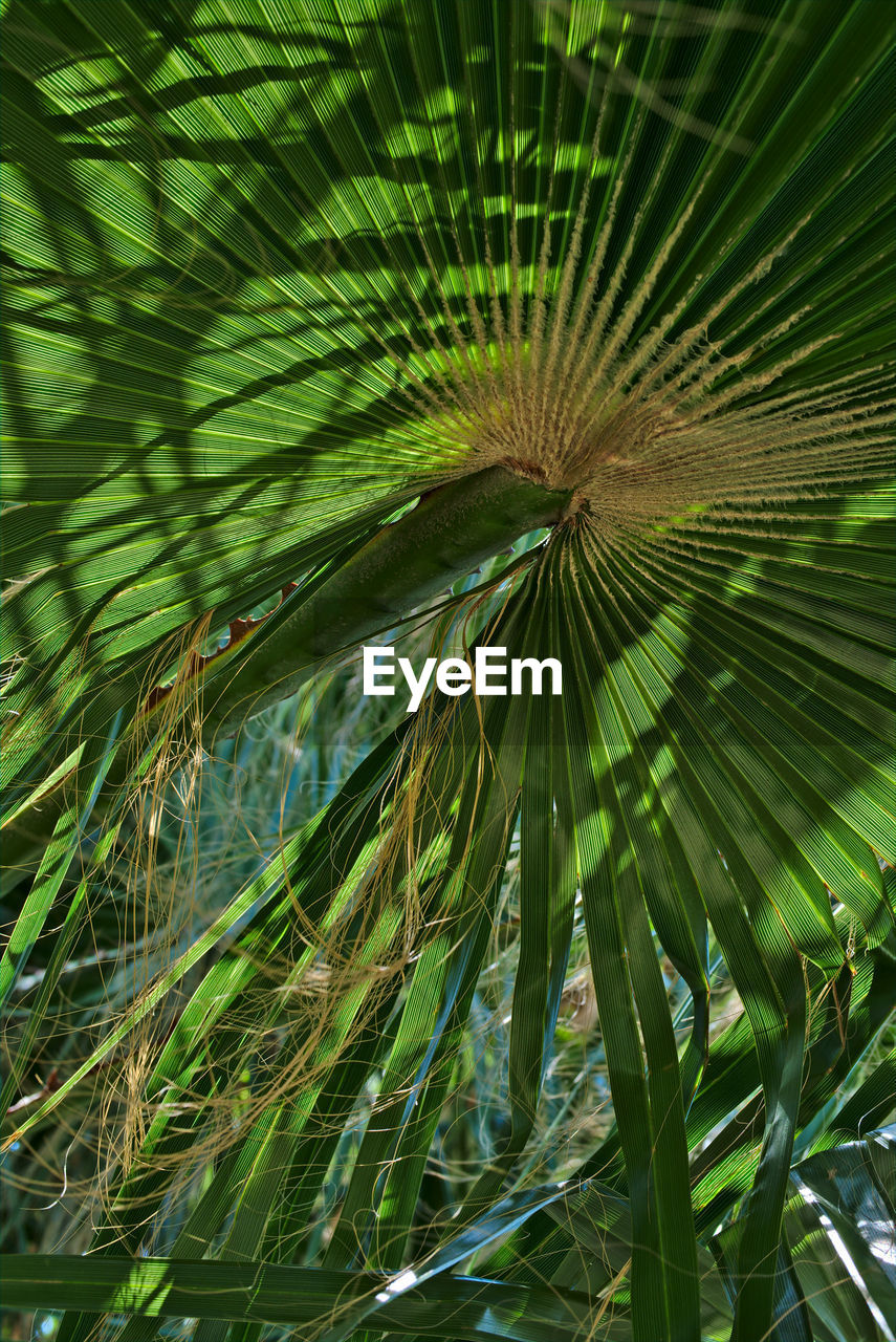 growth, green color, leaf, plant, plant part, beauty in nature, tree, nature, no people, tropical climate, close-up, palm tree, day, palm leaf, full frame, outdoors, freshness, backgrounds, tranquility, pattern, leaves, tropical tree