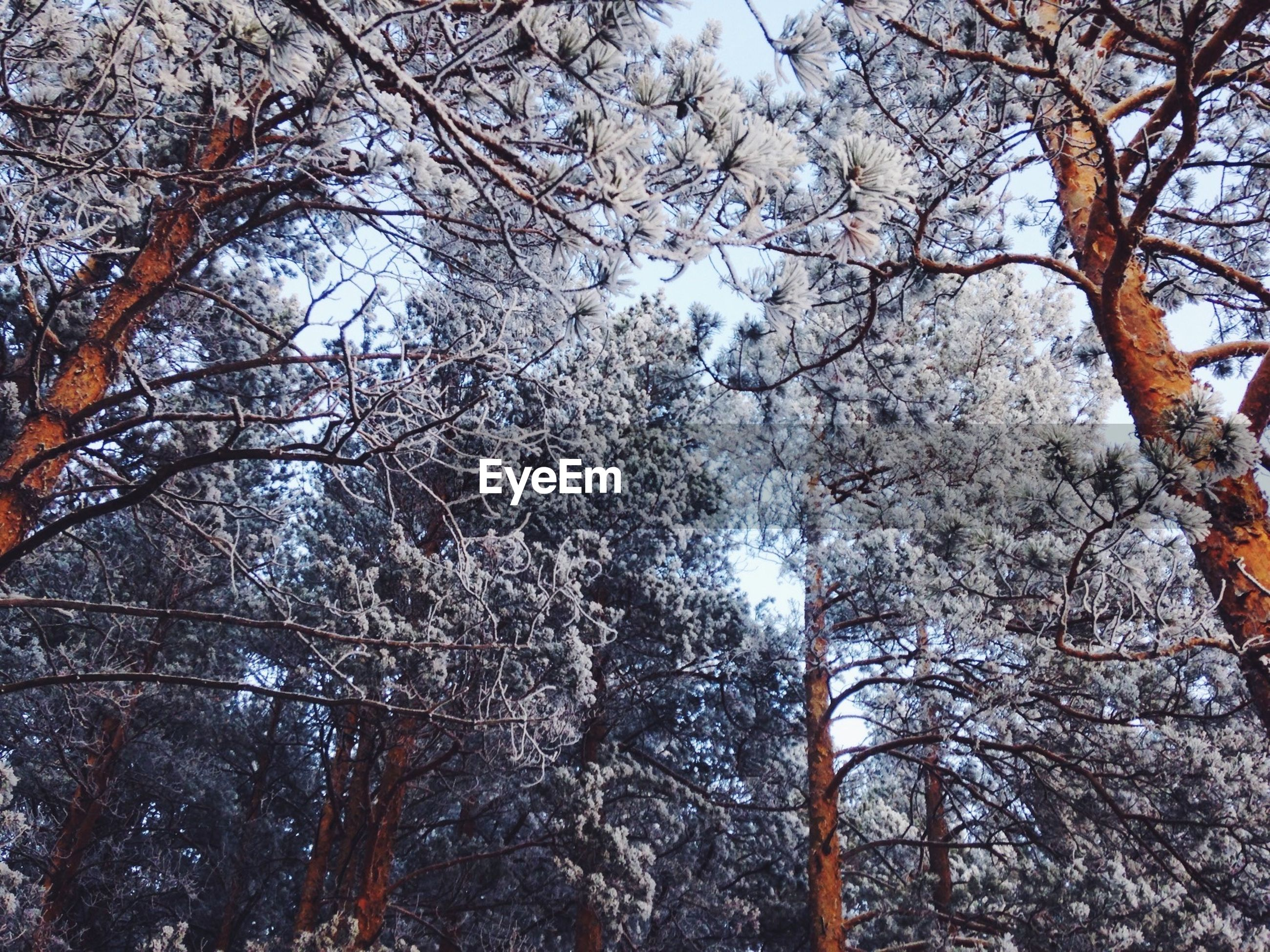 tree, branch, bare tree, tree trunk, winter, tranquility, nature, low angle view, season, snow, growth, beauty in nature, cold temperature, tranquil scene, scenics, sky, day, forest, outdoors, no people