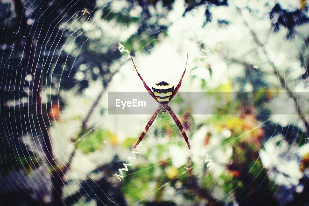 spider, spider web, web, focus on foreground, nature, one animal, no people, close-up, outdoors, animal themes, day, animals in the wild, beauty in nature, fragility