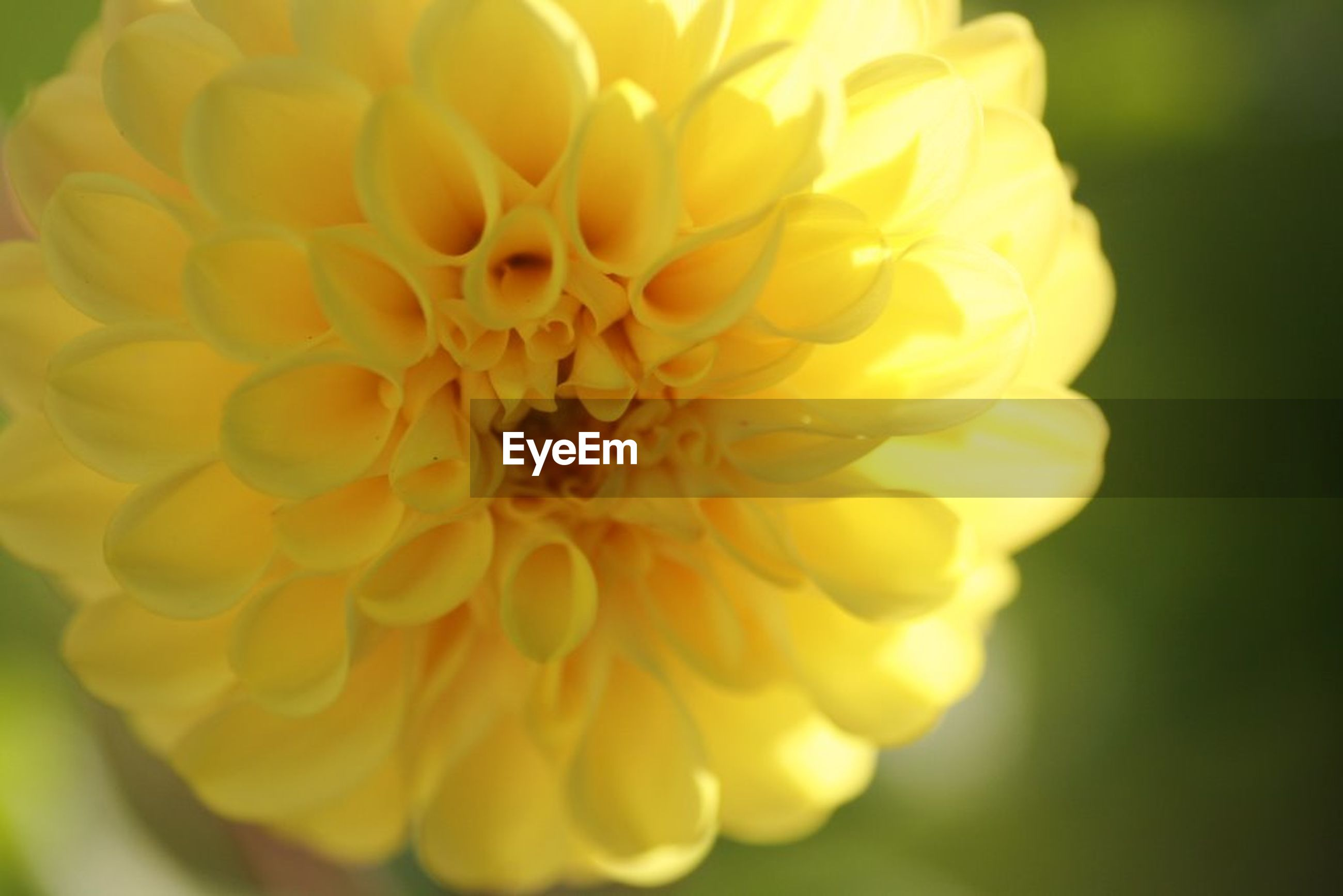 flower, petal, flower head, fragility, beauty in nature, nature, freshness, growth, yellow, close-up, plant, no people, outdoors, blooming, day