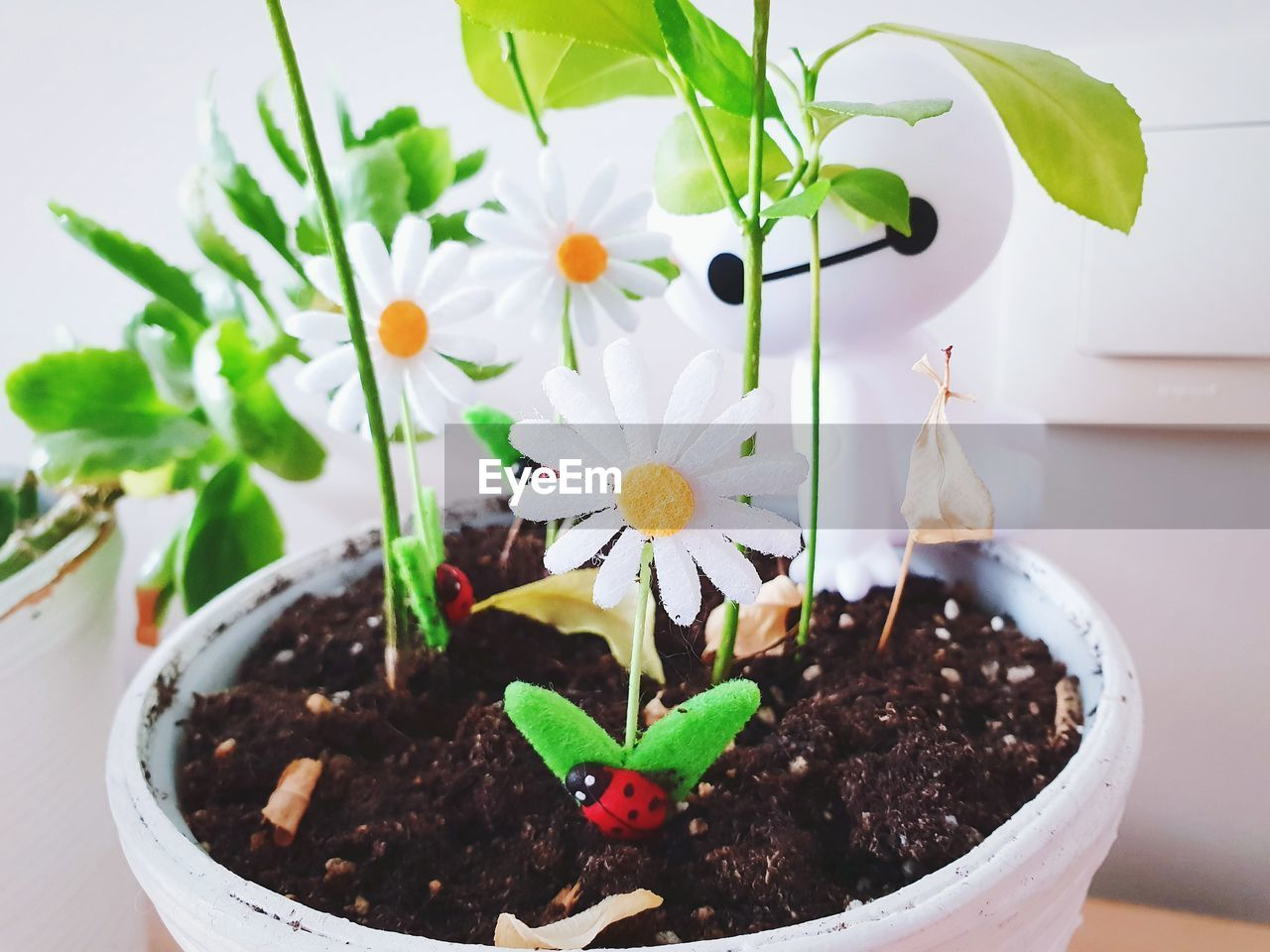 plant, flower, freshness, growth, flowering plant, potted plant, nature, vulnerability, fragility, leaf, close-up, beauty in nature, plant part, focus on foreground, no people, green color, day, botany, flower head, seedling, flower pot, temptation
