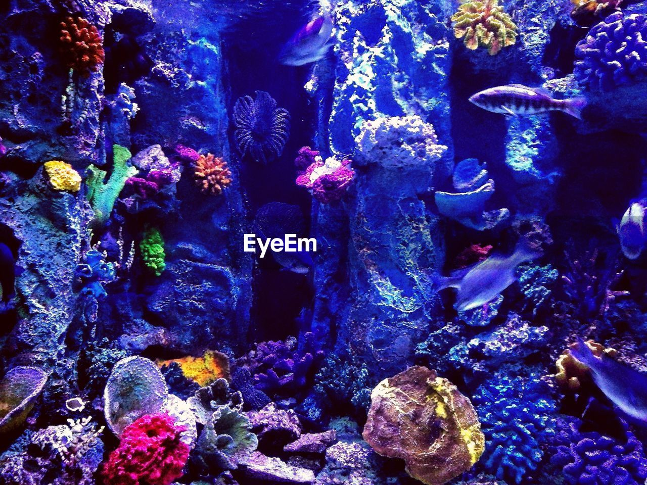 underwater, sea life, water, animal themes, fish, swimming, large group of animals, aquarium, animals in the wild, undersea, no people, nature, blue, indoors, coral, multi colored, beauty in nature, day, close-up
