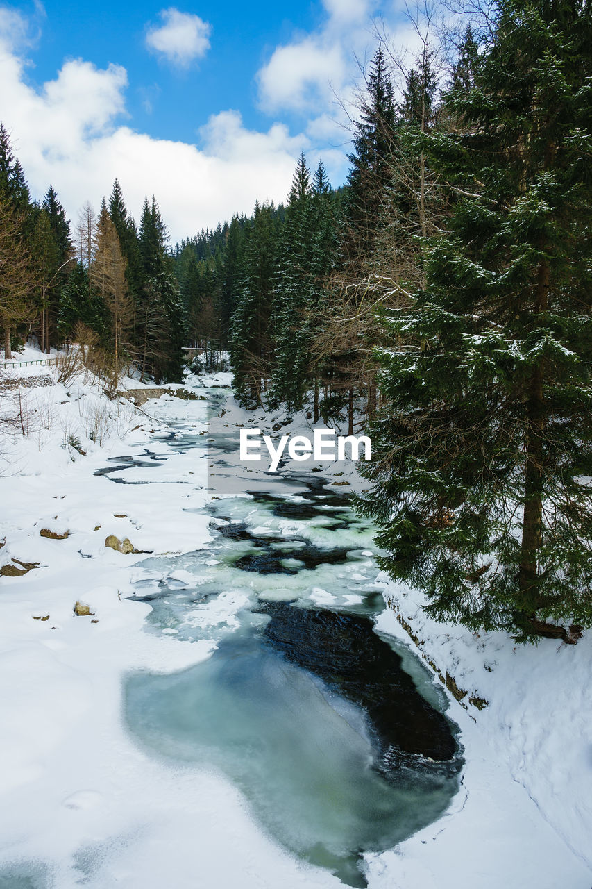 tree, plant, snow, cold temperature, beauty in nature, winter, sky, cloud - sky, scenics - nature, water, nature, tranquil scene, tranquility, no people, day, non-urban scene, growth, frozen, outdoors, flowing water, flowing