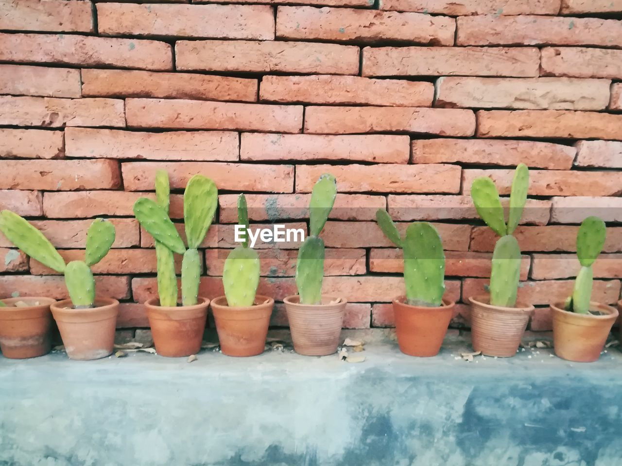 CLOSE-UP OF POTTED PLANTS ON WALL