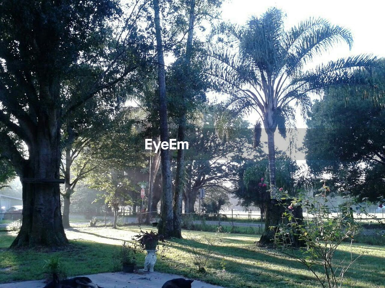 tree, palm tree, growth, nature, tranquility, no people, tranquil scene, beauty in nature, outdoors, tree trunk, landscape, scenics, day, grass
