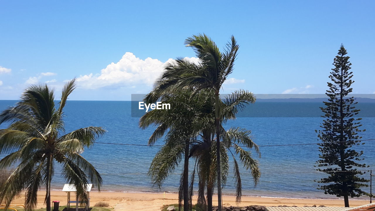 palm tree, tree, sea, scenics, nature, tranquility, sky, tranquil scene, beach, beauty in nature, day, outdoors, blue, water, no people, horizon over water, growth